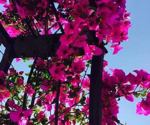 rosa, preparatoria, and jardín image