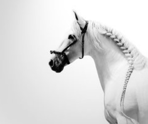 horse and black & white image