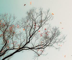lindo, gostei, and estações image