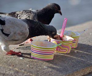 ice cream, pigeon, and yoummy image