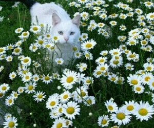cat, flowers, and plants image
