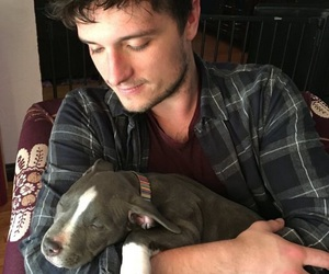 josh hutcherson, dog, and josh image