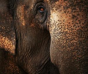 animal, close up, and elephant image