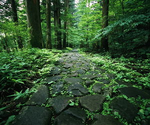 forest, green, and japan image
