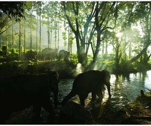 elephant, thailand, and travel image