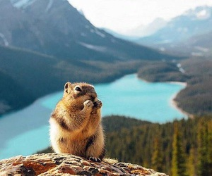 animal, mountains, and nature image