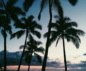 beach, california, and florida image