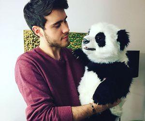 panda, youtube, and cute image