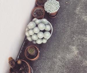 cactus, plants, and switzerland image