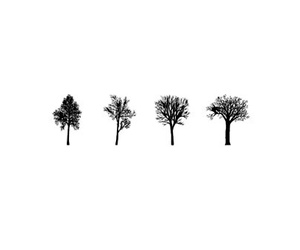 background, minimalistic, and plants image