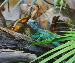 zielony, zwierze, and barwy image