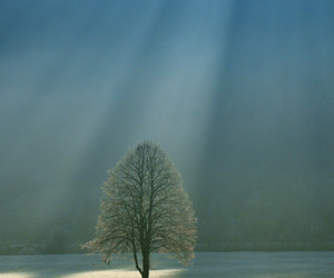 tree, photography, and landscape image