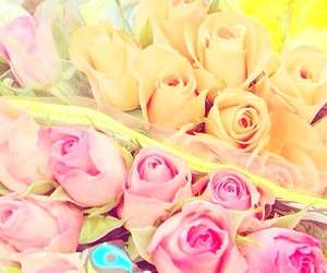 flowers, roses, and cute image