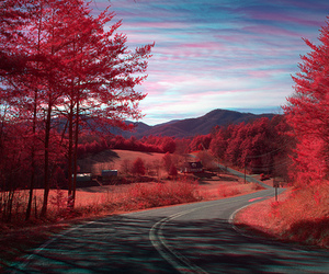 red, tree, and road image