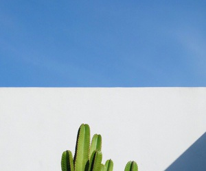beauty, cactus, and beautyinsimplicity image