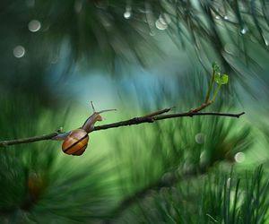 macro, snail, and nature image