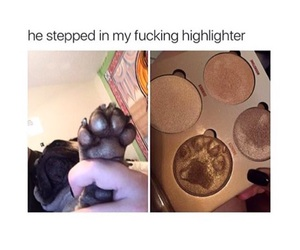 dog, funny, and highlighter image