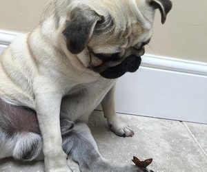 dog, butterfly, and cute image