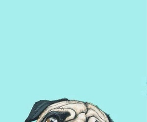 dog, wallpaper, and pug image
