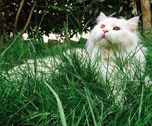 cat, green, and lovely image