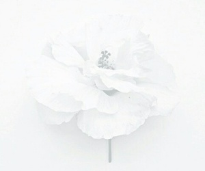 beautiful, flowers, and white image