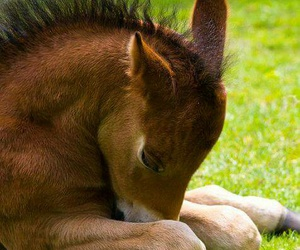 horse, foal, and animal image