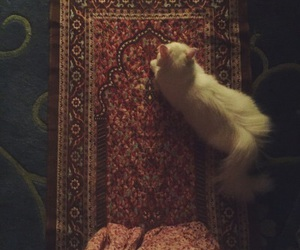 cat and muslim image