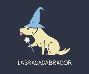 dog and labrador image
