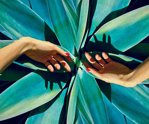 hands, plants, and green image