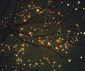lights, night, and tree image