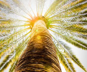 palm trees and nature image