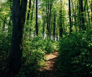 forest, nature, and peace image