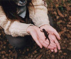 animal, lizard, and hands image