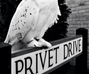 harry potter, privet drive, and hedwig image