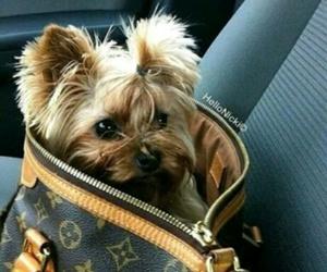 dog, luxury, and LV image