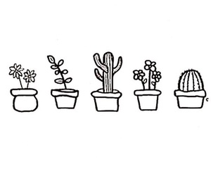 plants, cactus, and overlay image