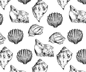 background, seashells, and black and white image