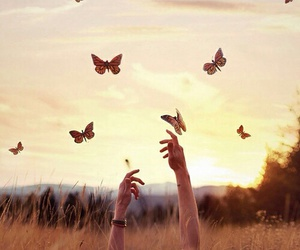 butterfly, wallpaper, and nature image