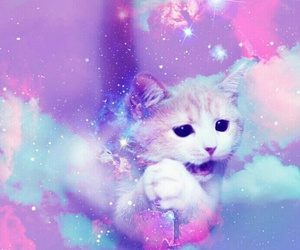 cat, galaxy, and pink image