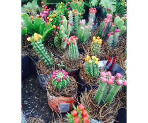 cactus, colores, and plantas image