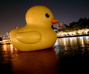 duck, lights, and night image