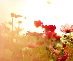 bokeh, flowers, and field image