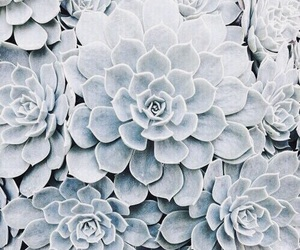 blue, flowers, and indie image