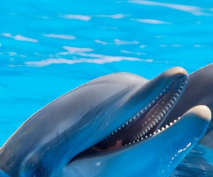 dolphins image