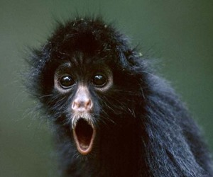 monkey, cute, and funny image