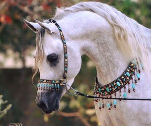 animals, horse, and pets image