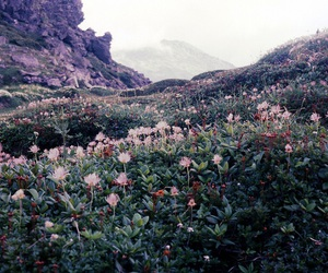 flowers, nature, and indie image