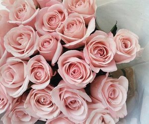 pink, romantic, and roses image