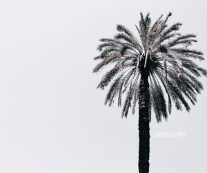 palm trees, black and white, and minimalist image