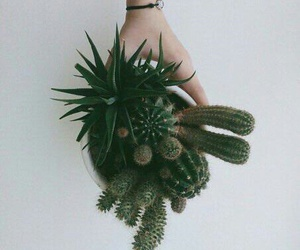 cactus, green, and hand image